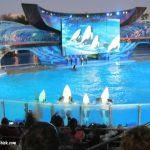Family Vacation: Sea World Orlando Is More Than Shamu