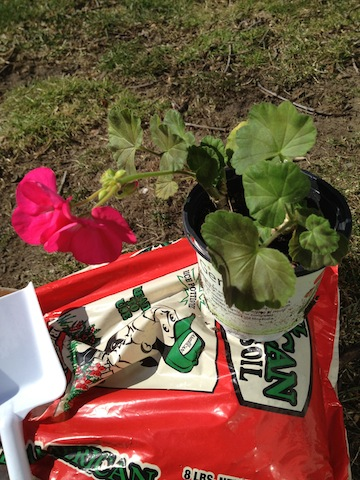 The Frugal Gardener: Savvy and Sensational Shoe Planters