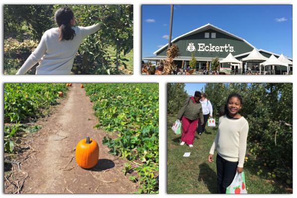 Family Fall Fun: Picking Apples and Pumpkins at Eckert's Farm