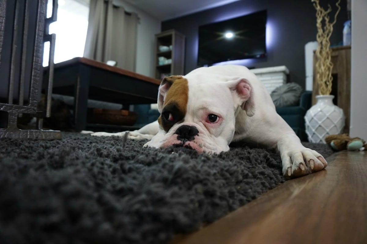 Side Hustle Idea: Earn Extra Income as a Pet Sitter