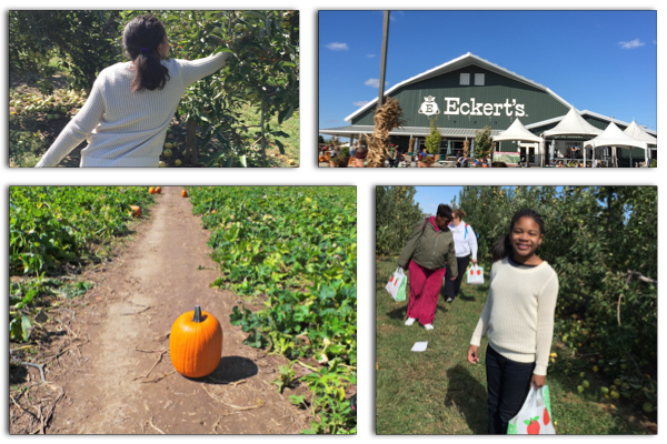 Family Fall Fun: Picking Apples and Pumpkins at Eckert's Farm
