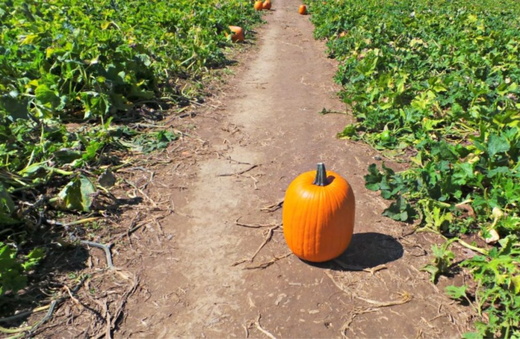 As working mamas who juggle a lot, we all have our highs and lows. Life is like pumpkins in that way---we have our season. What will you do with yours?